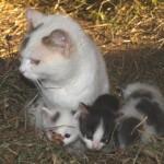 Die junge Katzenfamilie