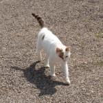 Persilchen - eine unserer Katzen