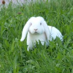 Lucky, der Hase