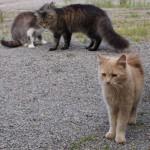 Zutrauliche Katzen auf dem Unterfalkenhof
