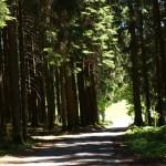 Zufahrtsweg zum Unterfalkenhof